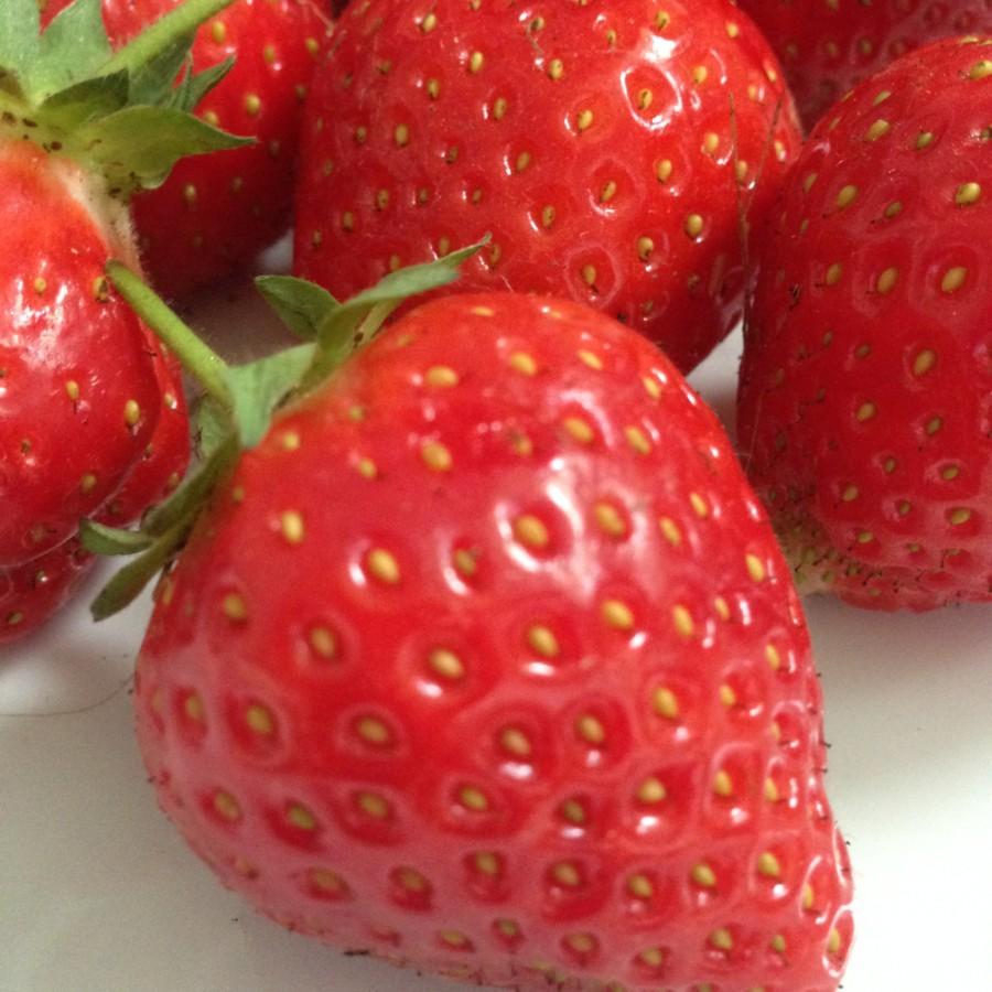 Endlich – die Erdbeer-Saison beginnt