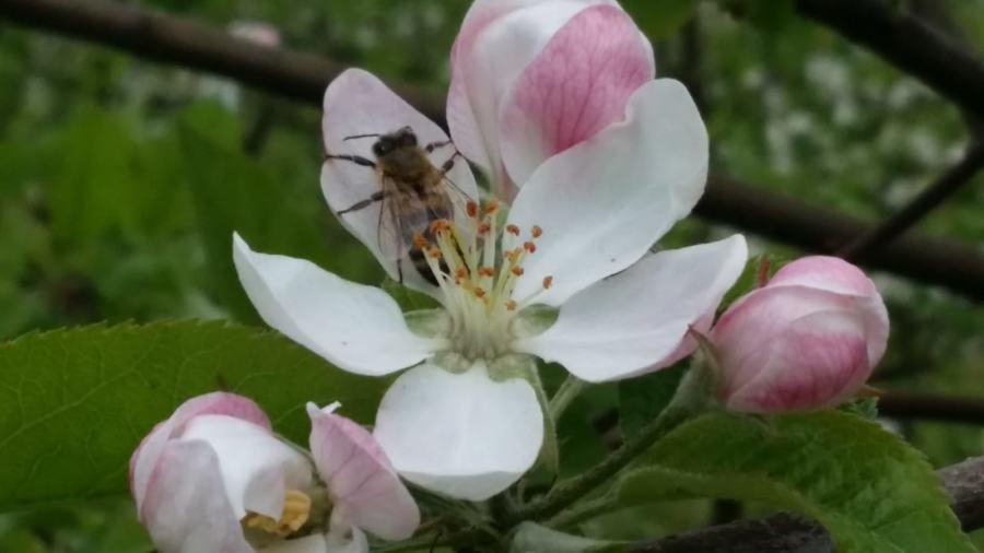 Lust auf einen Bienenstock …
