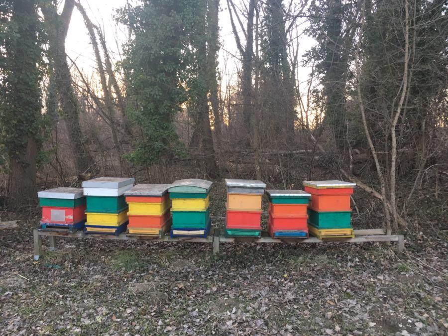 Bienenstöcke Au